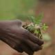 Reveal Focus 4, Stewardship statements